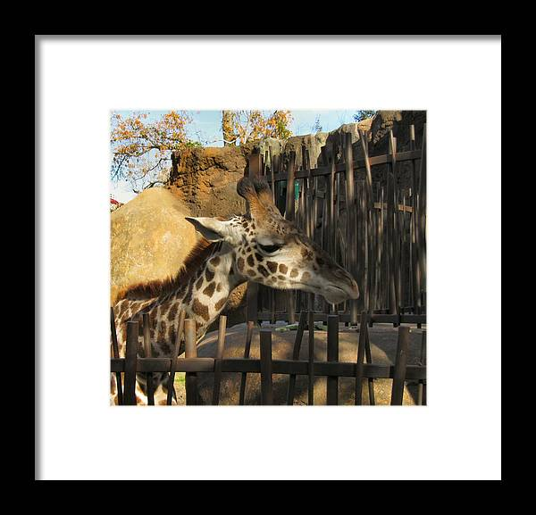 Giraffe Framed Print featuring the photograph Can We Talk by Camera Candy