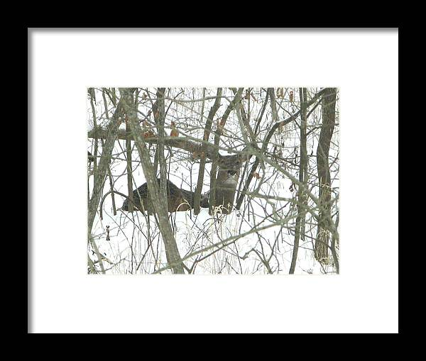 Nature Framed Print featuring the photograph Can You See Me by Martie DAndrea