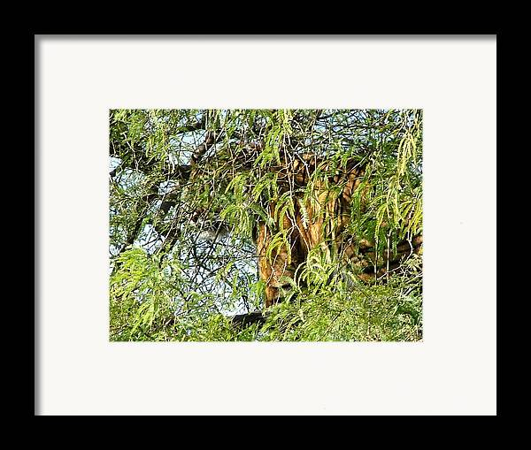 Tiger Framed Print featuring the photograph Can You See Me........ by Nick Gustafson