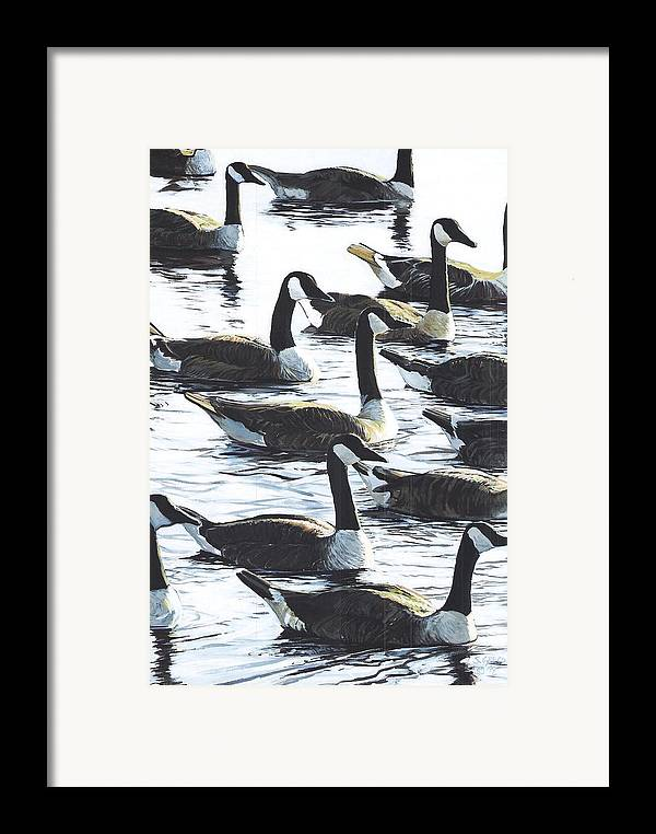 Wildllife Framed Print featuring the painting Canada Geese 1 by Steve Greco