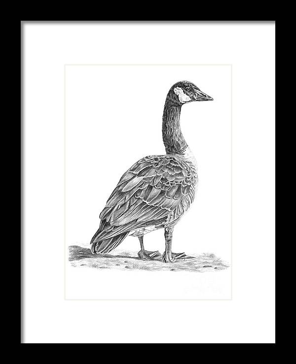 Canadian Goose Framed Print by Pencil Paws
