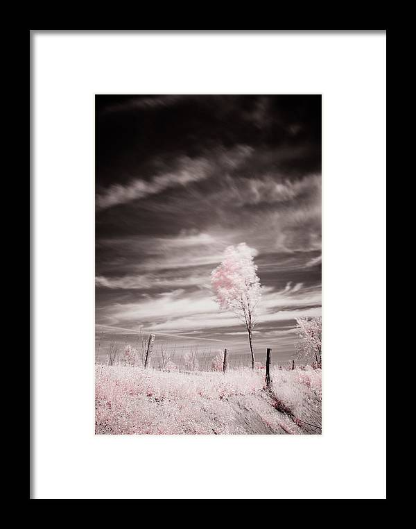 Infrared Framed Print featuring the photograph Candy Cotton Dream by Lea Seguin