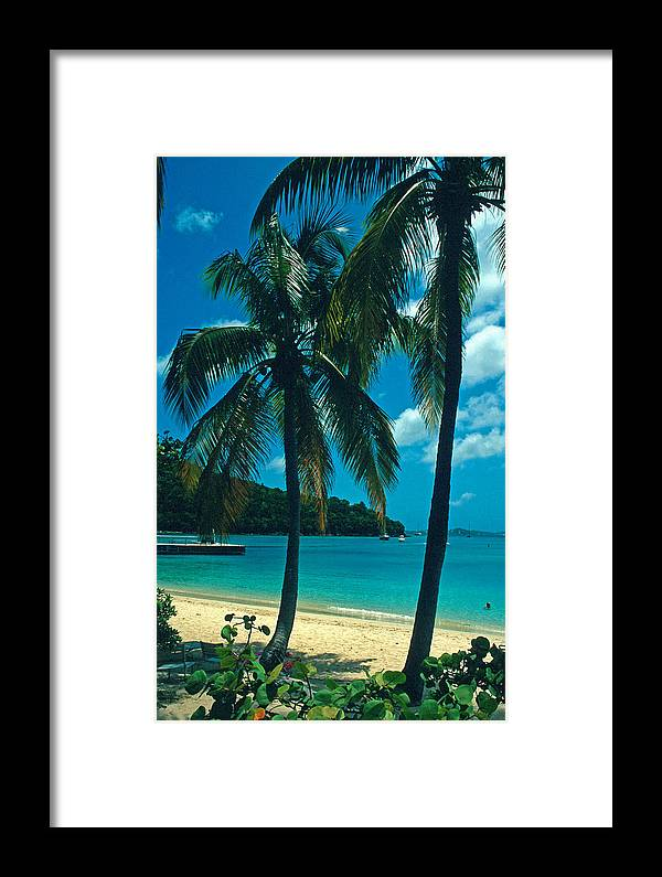 Beaches Framed Print featuring the photograph Caneel Bay Palms by Kathy Yates