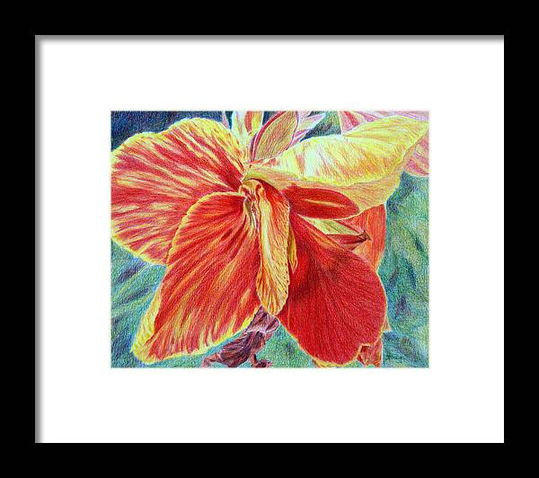 Canna Lily Framed Print featuring the drawing Canna Lily by Tina Storey