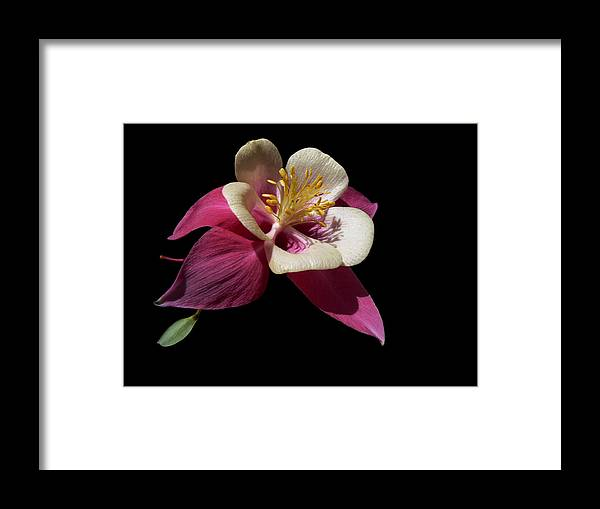 Burgundy Framed Print featuring the photograph Captivating by Doug Norkum