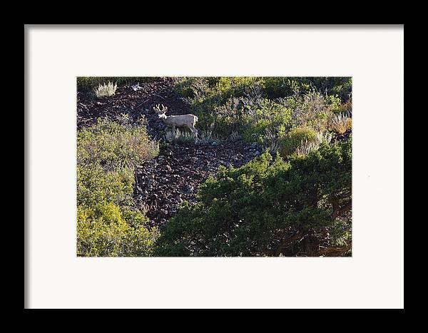 Black Mesa Framed Print featuring the photograph Capulon Buck by Charles Warren