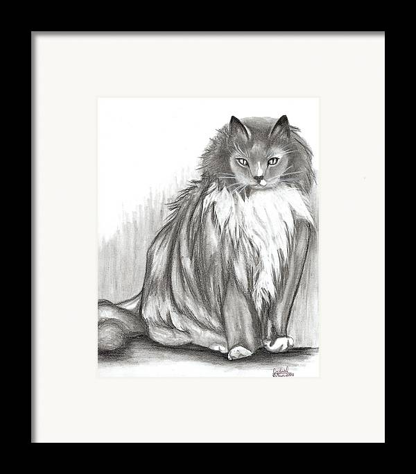 Cats Framed Print featuring the drawing Carl by Crystal Suppes