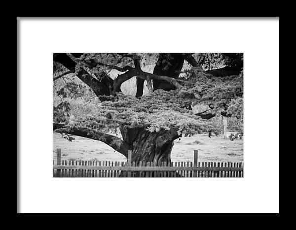 Big Sur Framed Print featuring the photograph Carmel Valley by Catherine Sobredo