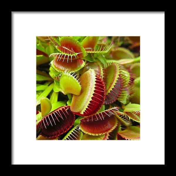 Nature Framed Print featuring the photograph Carnivores by Hoang Bui