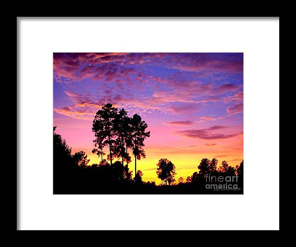 Sunset Framed Print featuring the photograph Carolina Pine Sunset by Patricia L Davidson