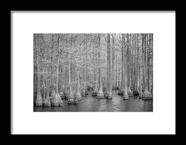 Ir Framed Print featuring the photograph Carvers Cypress Ir by Tony Noto