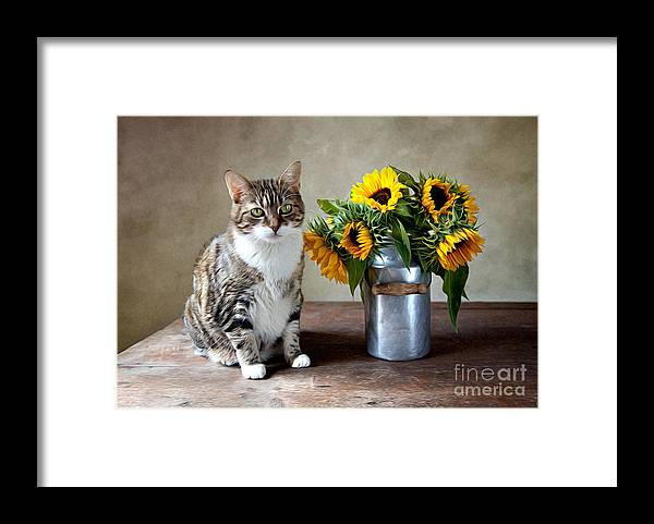 Cat Framed Print featuring the painting Cat and Sunflowers by Nailia Schwarz