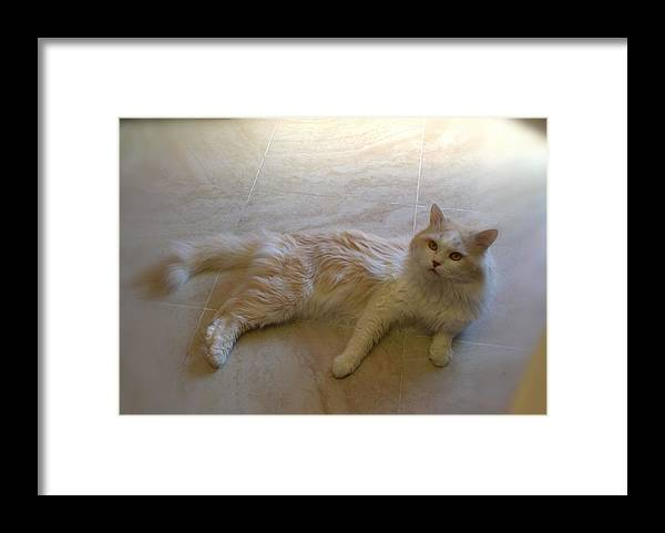 Pushok Framed Print featuring the photograph cat by Artvid