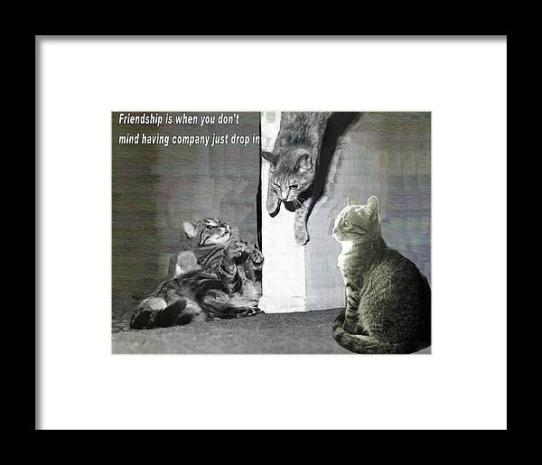 Cats Framed Print featuring the photograph Cat Dropping In by Laura Smith