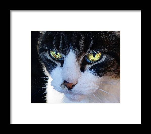 Cat Framed Print featuring the digital art Cat Eyes by Jana Russon