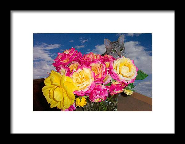 Cats Framed Print featuring the photograph Cat In Roses by Laura Smith