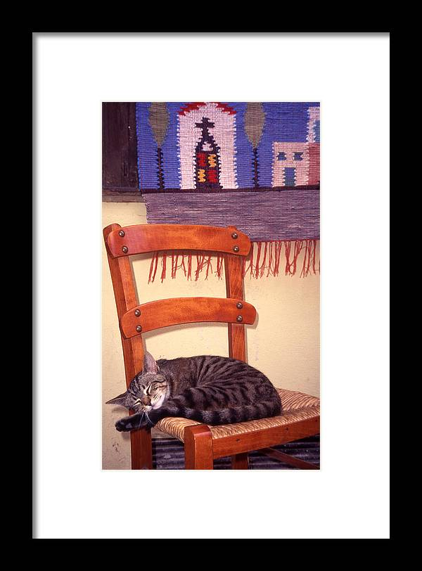 Cat Framed Print featuring the photograph Cat Nap by Steve Outram