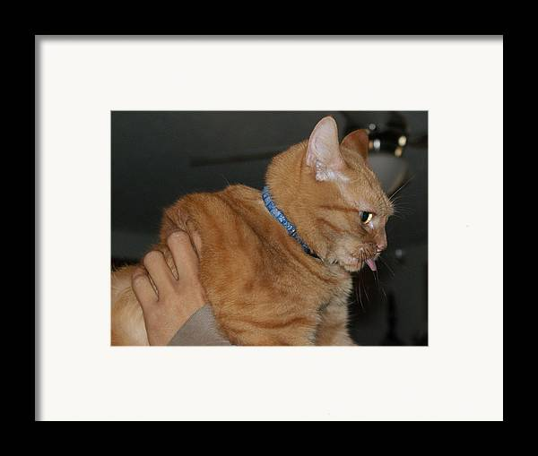 Cat Framed Print featuring the photograph Cat Raspberry by Lynda Dawson-Youngclaus