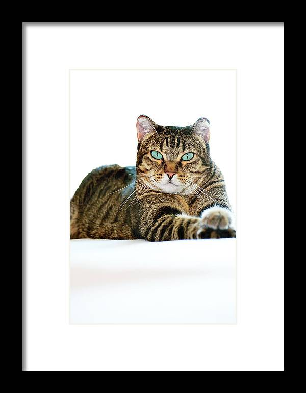 Cat Framed Print featuring the photograph Cat With Bright Eyes by Ksenia Kozhenkova