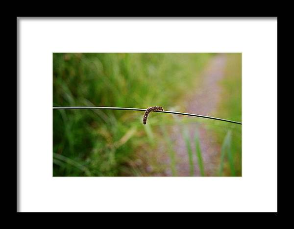Caterpillar Framed Print featuring the photograph Caterpillar by Nicole Herbert