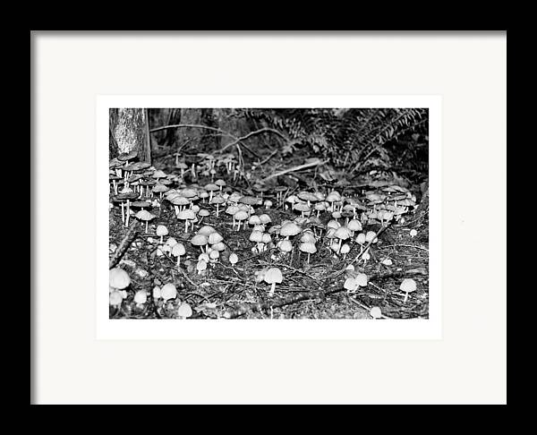 Black Framed Print featuring the photograph Caterpillars Playground 1 by J D Banks