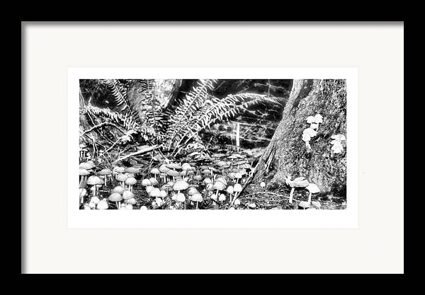 Black Framed Print featuring the photograph Caterpillars Playground 2 by J D Banks