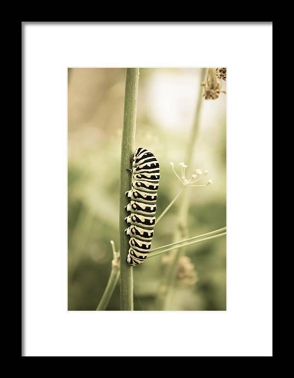 Caterpillar Framed Print featuring the photograph Caterpiller by Butter Milk