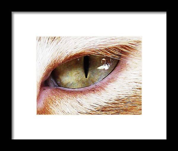 Beautiful Framed Print featuring the photograph 'cats Eye' by Paula Heffel