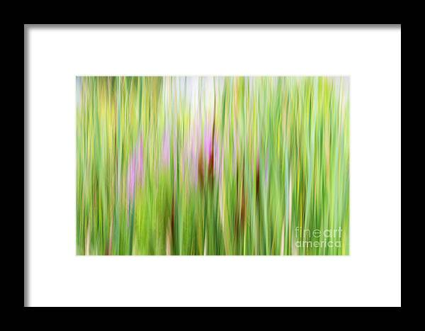 Abstract Framed Print featuring the photograph Cattails And Flowers by Darla Bruno