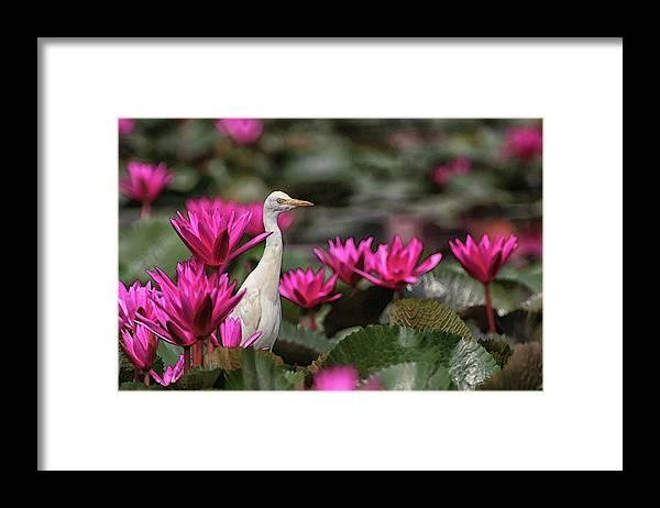 Bird Framed Print featuring the digital art Cattle Egret amongst Waterlilies by Sandeep Gangadharan
