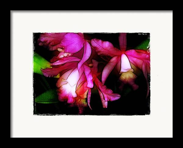 Orchids Framed Print featuring the photograph Cattleyas by Judi Bagwell