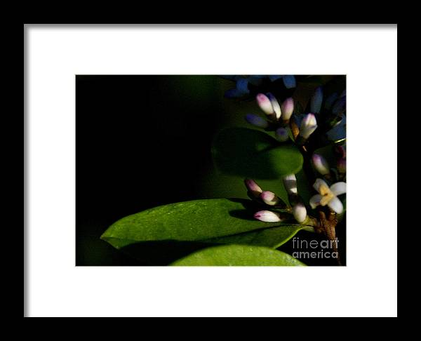 Plant Framed Print featuring the photograph Caught Between Shadow And Light by Linda Shafer