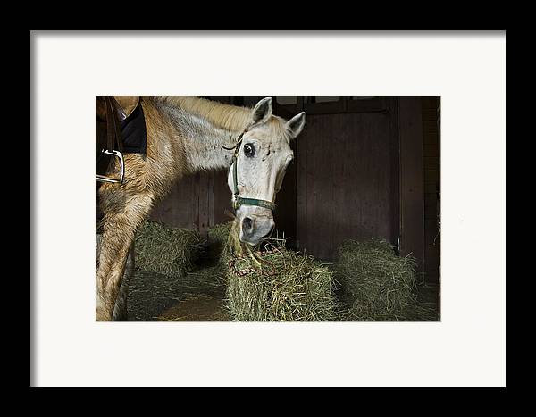 Horse Framed Print featuring the photograph Caught In The Act by Jack Goldberg