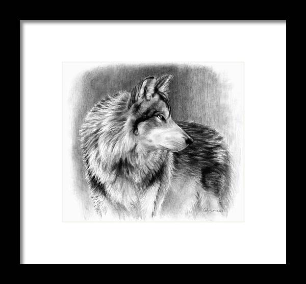Wolf Framed Print featuring the drawing Cautious Eyes by Carla Kurt