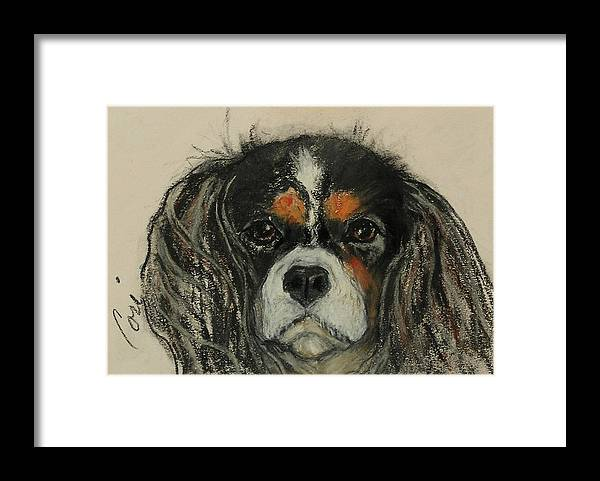 Cavalier Framed Print featuring the drawing Cavalier by Cori Solomon