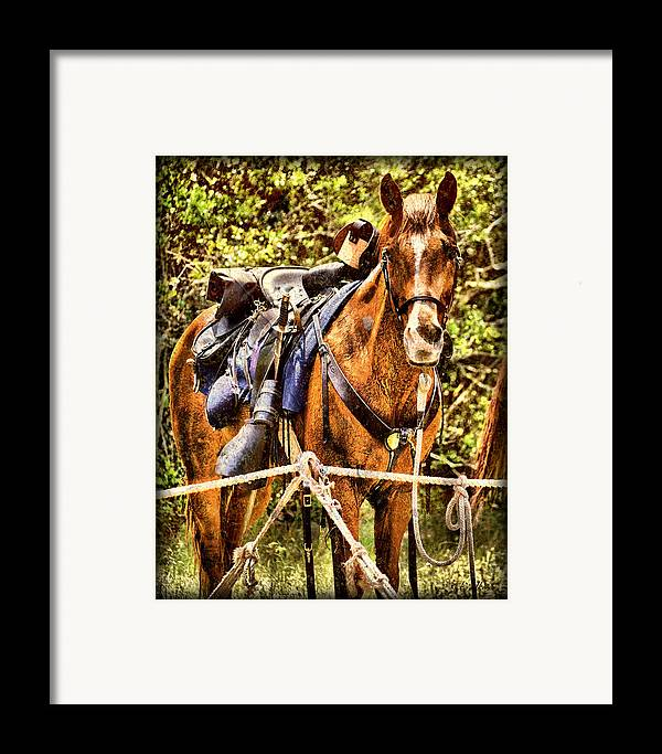 Civil War Framed Print featuring the photograph Cavalry Horse Circa 1864 by Rick Wilkerson