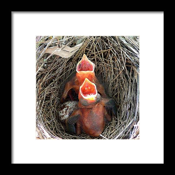 Cardinal Framed Print featuring the photograph Cavernous Cardinals by Al Powell Photography USA
