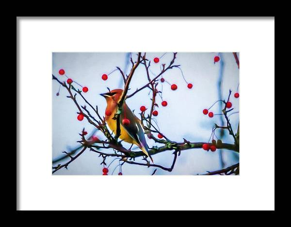 Cedar Waxwing Framed Print featuring the photograph Cedar Waxwing Painting by Trent Garverick