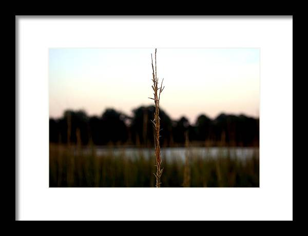 Reeds Framed Print featuring the photograph Center Of Attention by Alexandra Harrell