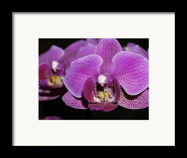 Orchids Framed Print featuring the photograph Center Of Attention by Joyce Hutchinson