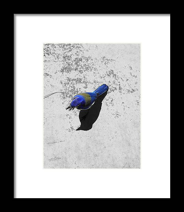 Birds Framed Print featuring the photograph Center Of Attention- Scrub Jay by Shawn Brandon