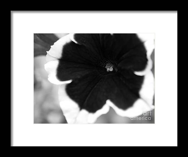 Floral Framed Print featuring the photograph Centered by Amanda Barcon