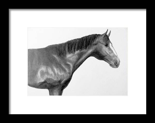 Horse Framed Print featuring the drawing Champ 2 by Susan Tilley