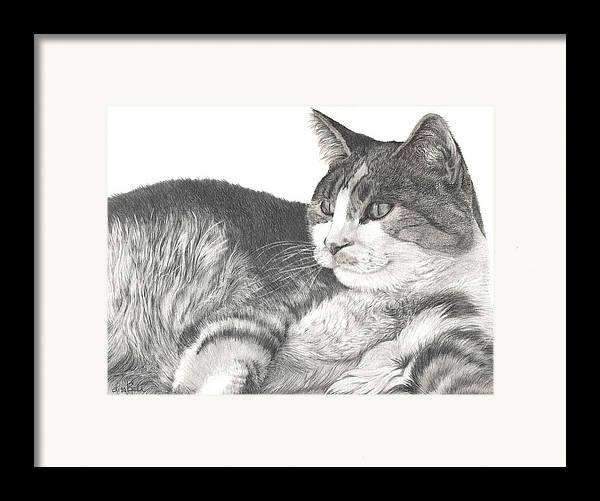 Cats Framed Print featuring the drawing Chance by Lisa Bell