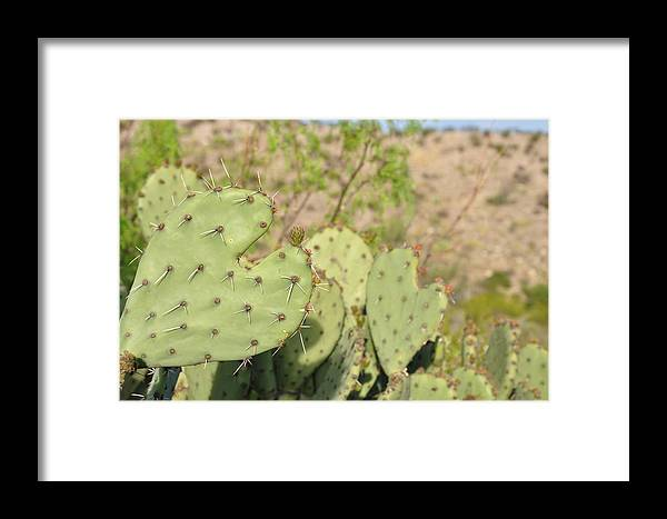 Landscape Framed Print featuring the photograph Character Cacti by Thor Sigstedt