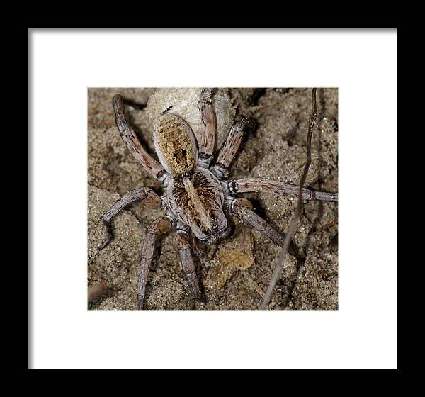Spider Framed Print featuring the photograph Charlotte by Debbie May