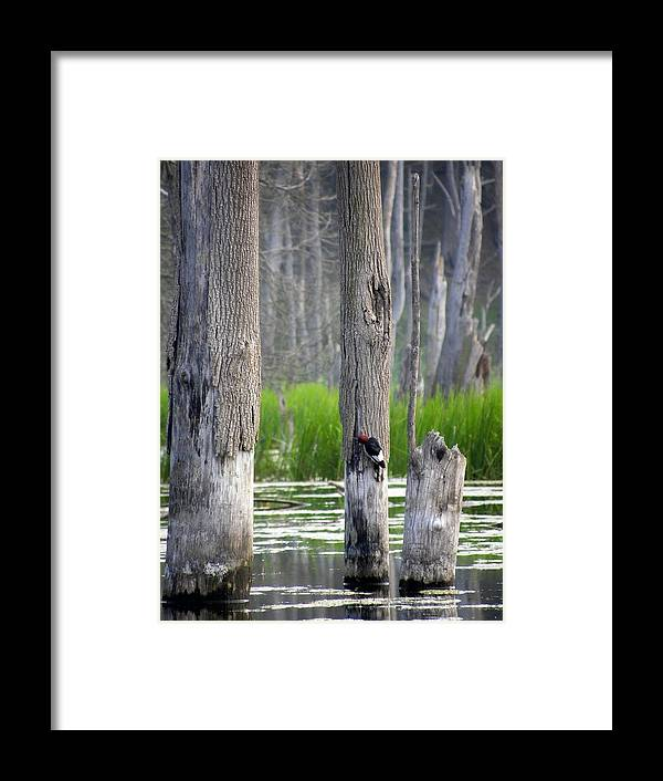 Woodpecker Framed Print featuring the photograph Around The Corner by Jewels Hamrick