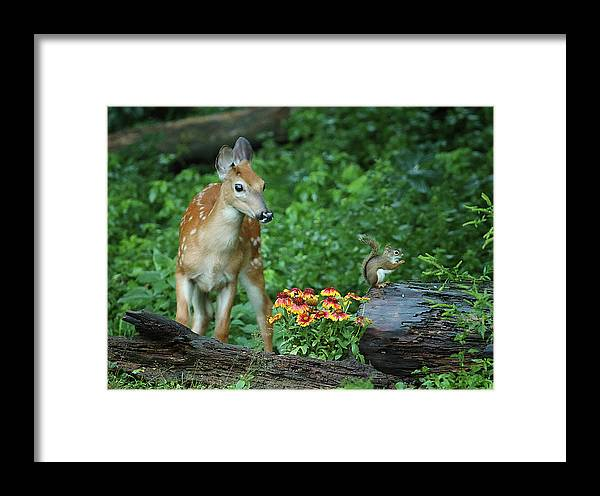 Deer Framed Print featuring the photograph Checking Out The Squirrel by Duane Cross