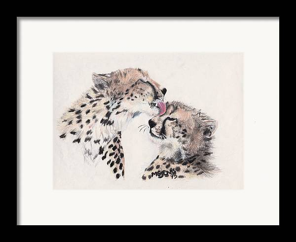 Cheetahs Framed Print featuring the drawing Cheetah Love by Marqueta Graham