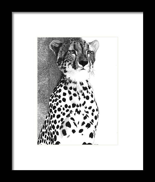 Cheetah Framed Print featuring the drawing Cheetah by Pat Huggins